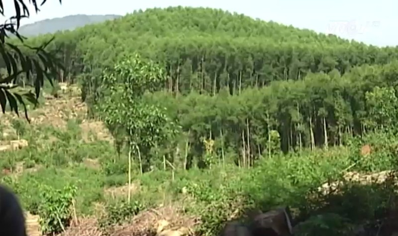 Khu vực đất rừng bị cấp GCN chồng lấn