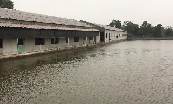 Khu trang trại gà, ao cá của ông Xá rộng ra giữa kênh Đình Đào