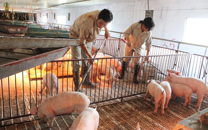 Nhiều thủ tục về Thẩm định điều kiện vệ sinh thú y sẽ được bãi bỏ - Ảnh: VGP/Đỗ Hương