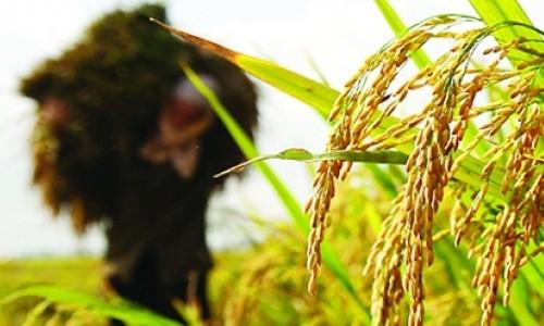 Bảo hiểm nông nghiệp: Sẽ thực hiện theo cơ chế tự nguyện