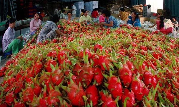 Xuất khẩu rau quả được dự báo sẽ tiếp tục có những phát triển vượt bậc và đạt kim ngạch 7 tỷ USD vào 2030. (Ảnh minh họa )