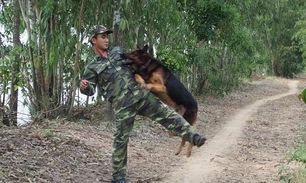 Thiếu úy Đặng Hoài Nhân (đồn biên phòng Phước Chỉ), thao vợt chó nghiệp vụ sẵn sàng chiến đấu. Ảnh: Võ Anh Tuấn