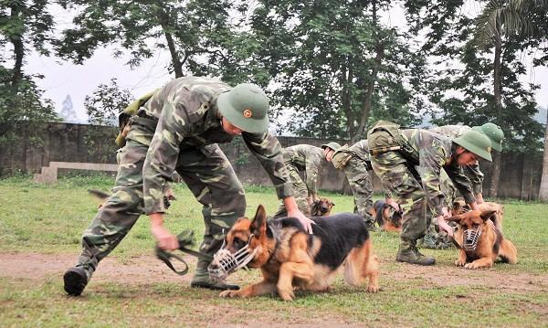 Chó bắt đầu được huấn luyện khi 1-2 tuổi