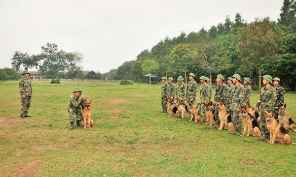 Mỗi tuần bảy ngày HLV đều chăm sóc huấn luyện củng cố phản xạ thường xuyên cho chó