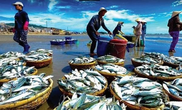 """Liệu Việt Nam có thoát khỏi tình trạng """"thẻ vàng"""" mà Ủy ban Châu Âu (EC) đang áp dụng đối với hoạt động khai thác thủy sản khi thời hạn sắp kết thúc?Ảnh minh họa"""