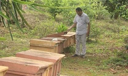 Ông Hồ Văn Sâm kiểm tra đàn ong mật