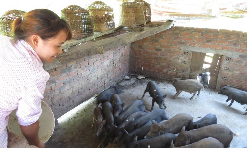Hộ chị Hồ Thị Danh (thôn 2, xã Trà Đốc, huyện Bắc Trà My, Quảng Nam) vốn thuộc gia đình hộ nghèo, vốn vay ưu đãi đã giúp gia đình chị xây được nhà, thoát nghèo, nay có được 3,5ha keo và 4 con bò