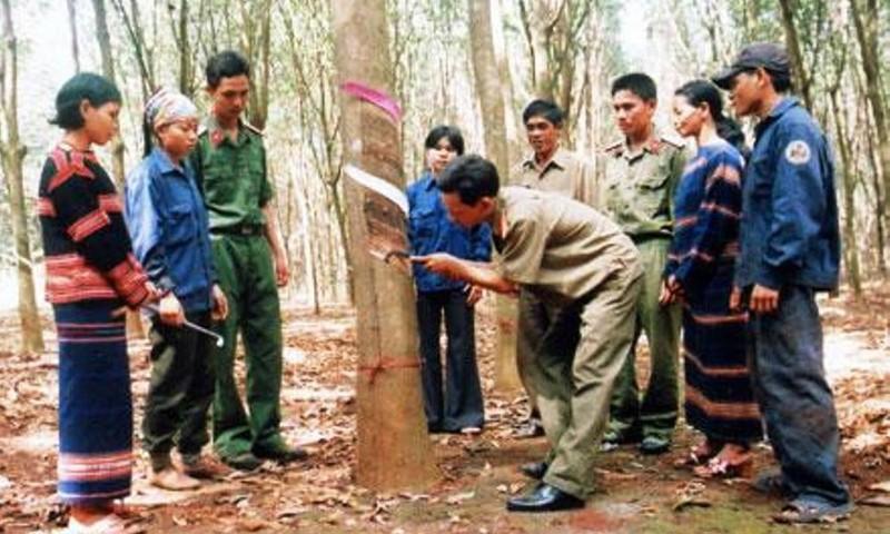 Cán bộ của Binh đoàn 15 hướng dẫn bà con dân tộc khai thác mủ cao su đúng kỹ thuật