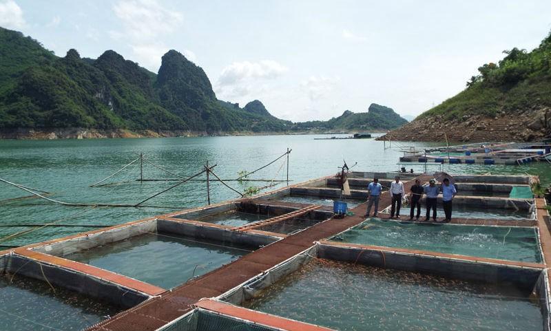 Nuôi cá trên lòng hồ sông Đà