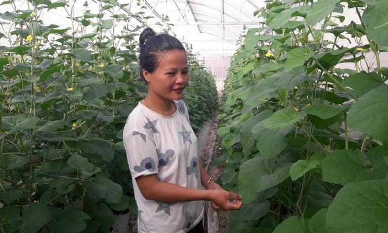 Giảng viên bỏ nghề về quê trồng dưa lưới