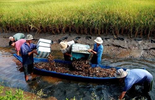Tây Yên (Kiên Giang): Đa dạng hóa sinh kế mô hình phát triển kinh tế