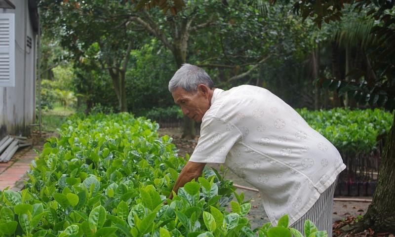 Lão nông trở thành tỷ phú nhờ mít lạ không hạt