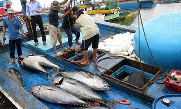 """Việt Nam quyết tâm gỡ """"thẻ vàng"""" với thủy sản vào đầu năm 2019. Ảnh minh họa"""