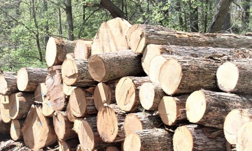 Xuất khẩu gỗ của Việt Nam: 13 tỷ USD - con số trong tầm tay?