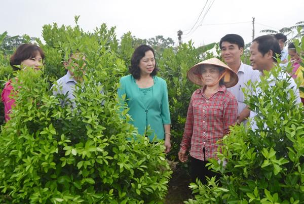 Kiểm tra mô hình nông thôn mới tại Hà Nội