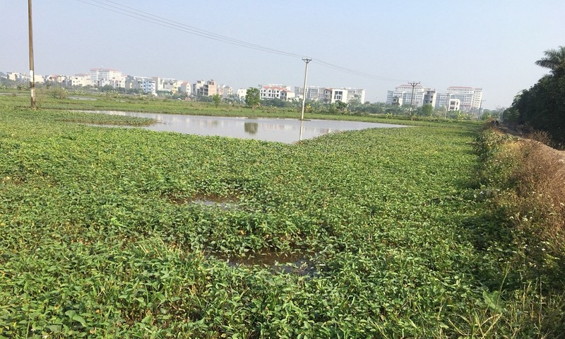 Hà Nội: Người dân khiếu nại không được giao đất ruộng theo quy định