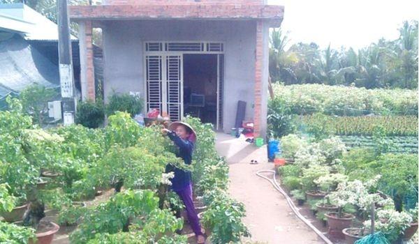 Chị Nguyễn Thị Kiều Chinh (ở ấp Lân Đông, xã Phú Sơn, huyện Chợ Lách, tỉnh Bến Tre) chăm sóc vườn hoa cảnh