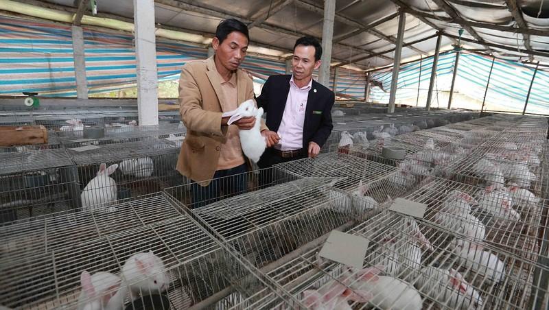 Vốn chính sách đã giúp người nông dân Thái Nguyên áp dụng hiệu quả kiến thức khoa học kỹ thuật vào sản xuất kinh doanh. ảnh: Trần Việt