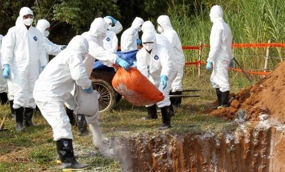 Tìm giải pháp cắt đứt mầm bệnh, tránh lây lan nhanh dịch tả lợn châu Phi
