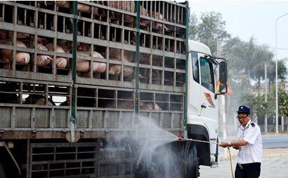 """Lực lượng Quản lý thị trường """"tung quân"""" chặn dịch tả lợn châu Phi lan vào Nam"""