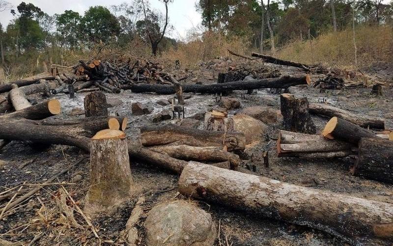 Cả một vạt rừng bị đốn hạ, bị đốt, khói nghi ngút