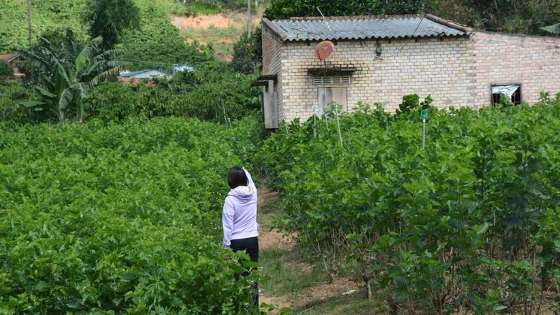 Thửa đất và căn nhà gia đình ông Quang nhận chuyển nhượng của ông Chính