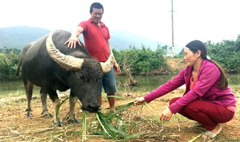 Nhiều hộ gia đình trên địa bàn xã Xuân Trạch được vay vốn ưu đãi kịp thời để phát triển chăn nuôi hiệu quả