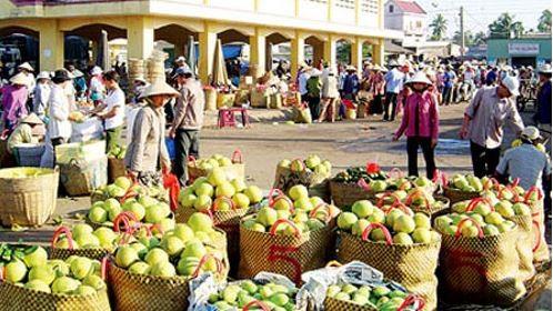 Nông sản xuất khẩu sang Trung Quốc gặp khó do chính người dân và doanh nghiệp thờ ơ trước các quy định nhập khẩu mới.  (Ảnh minh họa)