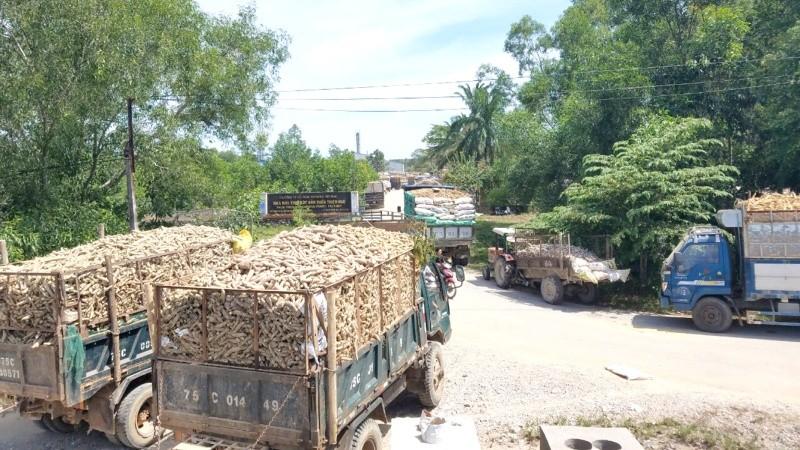 Hàng loạt xe tải lớn, nhỏ nối đuôi nhau xếp hàng dài chờ được bán sắn cho nhà máy