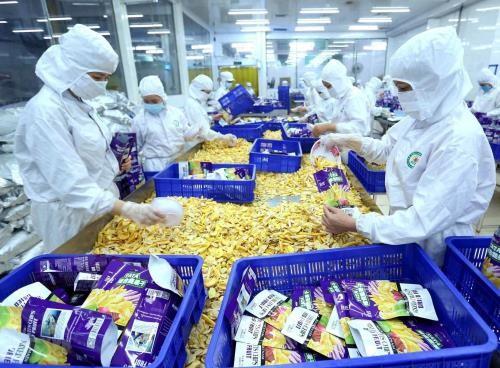Việt Nam có nhiều mặt hàng lợi thế xuất khẩu sang Trung Đông và châu Phi. Ảnh minh họa: Vũ Sinh/TTXVN