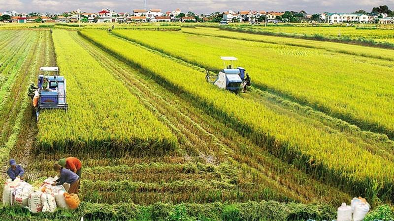 Rào cản doanh nghiệp muốn đầu tư vào nông nghiệp