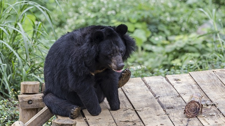 Chuyện của những đứa trẻ yêu gấu