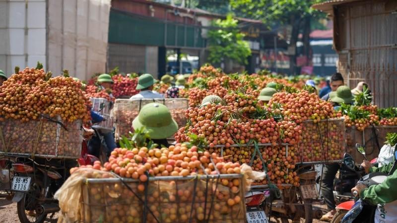 Vụ vải thiều Bắc Giang 2018 đem lại khoản doanh thu 5.000 tỷ thì trong đó dịch vụ logistics đã chiếm 2.000 tỷ