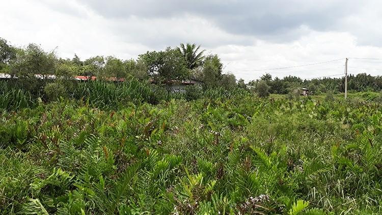 TP HCM: Dự án lấy đất Nông trường dừa vào 'tầm ngắm' cảnh sát điều tra