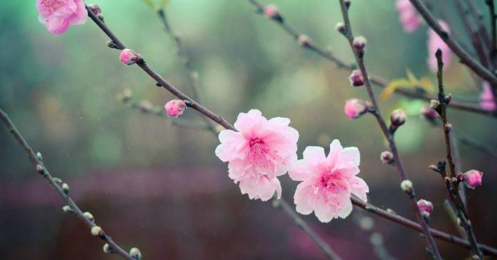 Trái ngọt mùa Xuân