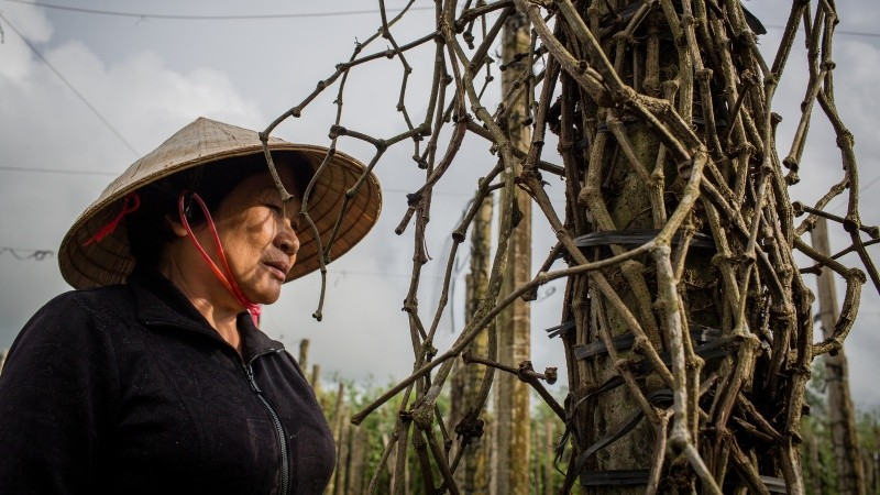 """""""Sai lầm lớn nhất của người trồng tiêu Tây Nguyên là học trồng tiêu theo trồng cây cà phê"""""""
