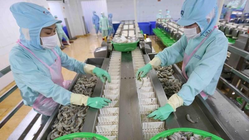 Năm 2019, kim ngạch xuất khẩu tôm của Việt Nam giảm gần 5%