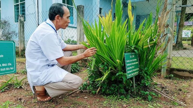 Để phục vụ việc chữa bệnh cho bà con dân bản, bác sỹ Thiện còn trồng rất nhiều cây thuốc nam trong khuôn viên trạm xá