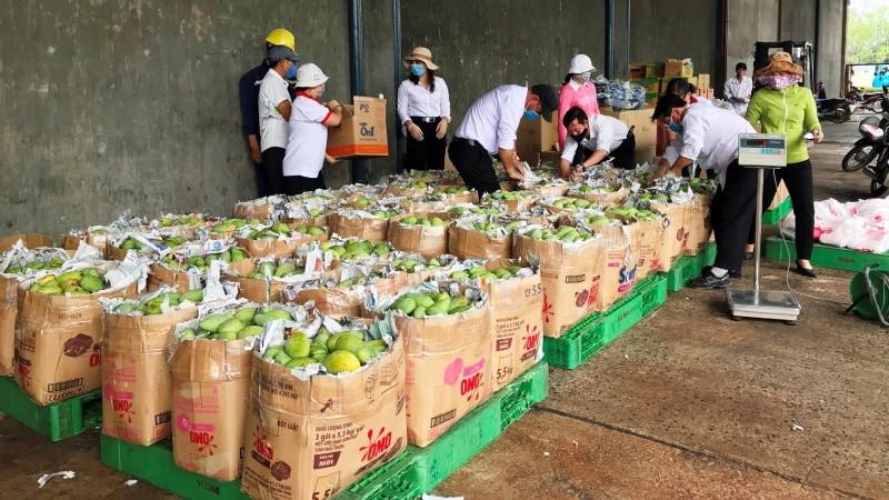 Hơn 2 tấn xoài được Vedan Việt Nam thu mua từ người nông dân huyện Vĩnh Cửu tỉnh Đồng Nai