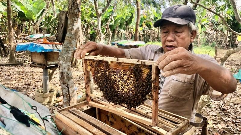 Từ nguồn vốn vay ưu đãi, ông Hà Văn Bàng đã phát triển mô hình nuôi ong lấy mật đem lại thu nhập ổn định