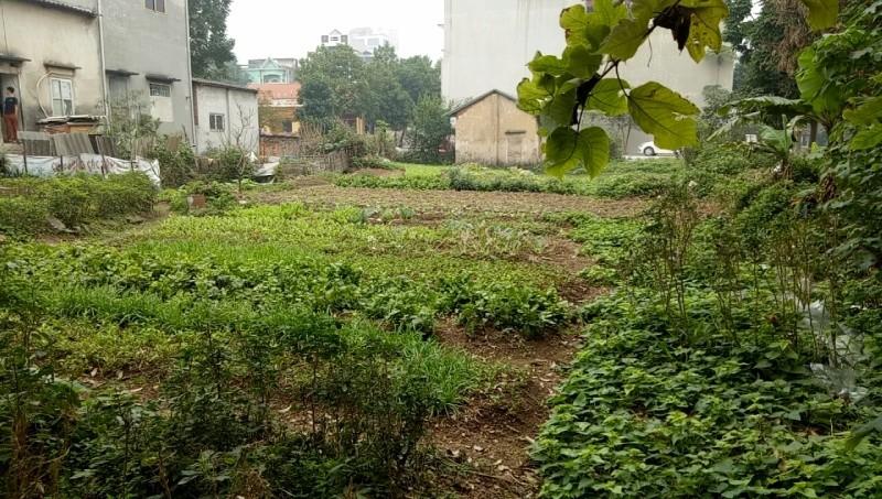 Khu đất tái định cư mà UBND TP Vĩnh Yên giao cho ông Yên