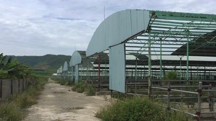 Kết luận điều tra 'đại dự án' nuôi bò: 'Tay không' vẫn dễ dàng vay 2.600 tỷ