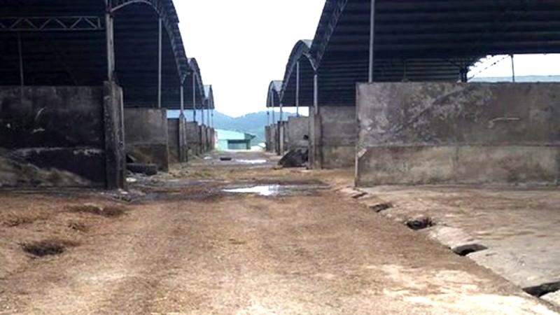"""Dự án chăn nuôi bò Bình Hà là """"cú sốc"""" cho câu chuyện thu hút đầu tư vào Hà Tĩnh"""