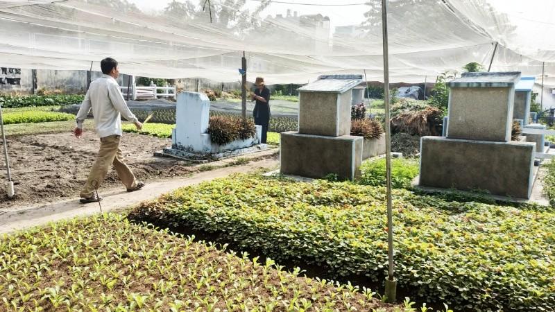 Phản hồi vụ 'cất nhà, trồng rau trên đất mộ': Người vi phạm đã bị buộc di dời đi nơi khác