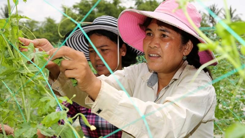 Nguồn vốn ưu đãi đã thâm nhập và đồng hành cùng đồng bào dân tộc Khmer ở Trà Vinh trong mọi hoàn cảnh, tạo cho bà con có ý chí, động lực vươn lên, làm thay đổi cuộc sống