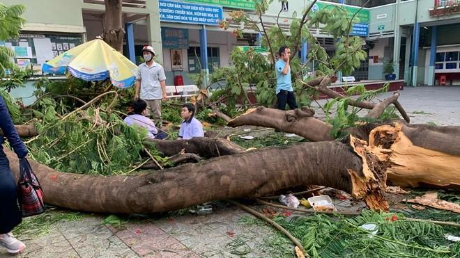 Hình ảnh cây đổ gây tai nạn thương tâm tại Trường THCS Bạch Đằng