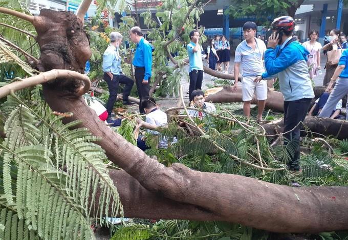 Quy định về bồi thường thiệt hại do cây cối gây ra