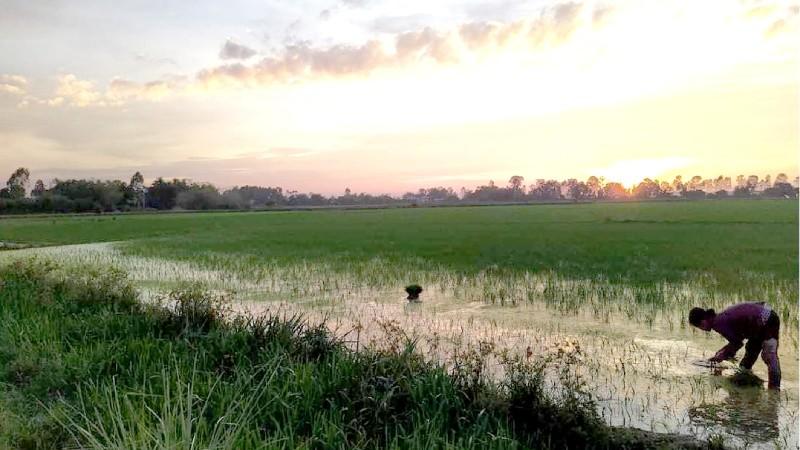 [Truyện ngắn] Vịn vào ngọn lúa bay lên
