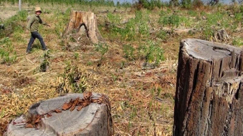 Cảnh báo tình trạng buông lỏng quản lý đất nông, lâm trường