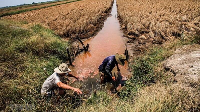 Người dân Đồng bằng sông Cửu Long chủ động chống hạn, xâm nhập mặn